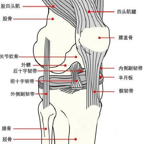 脊柱韧带结构图
