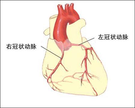 心脏的结构