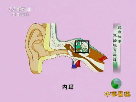 耳朵的结构图-内耳